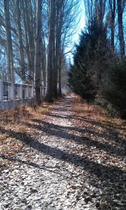 a path in Victory Park