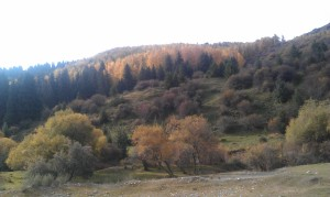 Fall foliage around Karakol
